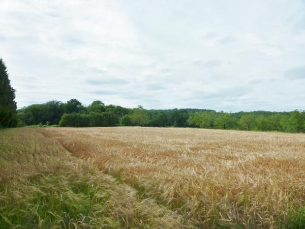 CLOSE TO SAINT CYPRIEN, STUNNING 1.5ACRE BUILDING PLOT !! IN A LITTLE AND VERY PEACEFUL HAMLET BUT 5