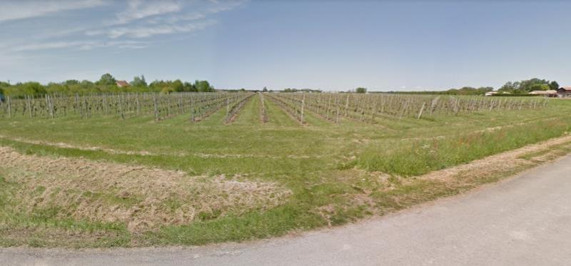 Viticole property with 11 hectares of vines